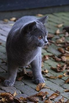 Adorable kitty playing with the leaves <3