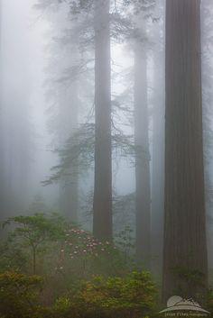 fog up,California