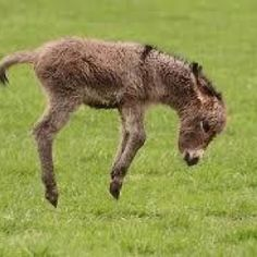 Baby donkey having fun.  They are sweet.