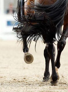 Dressage horse displaying its front bar shoe All The Pretty Horses, Beautiful Horses, Animals Beautiful, Dressage Horses, Horse Quotes, Horse Love, Dark Horse, Horse Pictures, Equine Photography