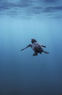 'Witnessing Majesty' With Dopey, Lovesick Sea Turtles (PHOTOS)