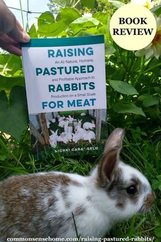 """Raising Pastured Rabbits For Meat"" by Nichki Carangelo is all about raising meat rabbits for profit in a pasture based system. Meat Rabbits Breeds, Raising Rabbits For Meat, Best Laying Hens, Frightened Rabbit, Rabbit Information, Keeping Goats, Rabbit Book, Rabbit Cages, Livestock"