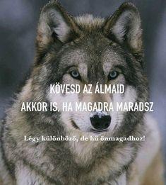 Husky, Motivation, Dogs, Animals, Animales, Animaux, Pet Dogs, Doggies, Animal