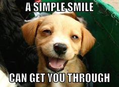 Dogs are always funny but have you ever seen smiling dogs, they looks really very funny when smiling. Check out 10 funny smiling dog pictures. Happy Animals, Funny Animals, Cute Animals, Animal Memes, Cute Puppies, Cute Dogs, Dogs And Puppies, Doggies, Happy Puppy
