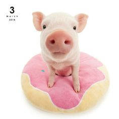 THE PIG Calendar      Official Japanese Store  Your Content Goes Here
