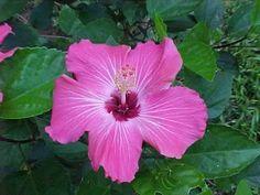 Floricultura Multiflora Fernandopolis: De Que Flor Você É ? Horóscopo Floral