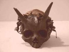 Arqueólogos fazem uma descoberta que poderia mudar o mundo: Esqueletos gigantes e crânios com chifres enterrados nos Estados unidos ~ Sempre Questione - Notícias alternativas, ufologia, ciência e mais Mais