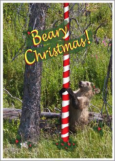 Card Note Greeting Christmas Holiday Wildlife Grizzly Bear Cub Photo Nature Cheerful Fun 3 Pack Original Photography 5x7 Inch Heavy Weight by ImagesByCat on Etsy