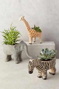 could do plastic dino planter on the wall with faux succulents  Wild Wanderer Planter - anthropologie.com