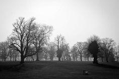 Park, Parks, Trees, Flora, Black And White #park, #parks, #trees, #flora, #blackandwhite