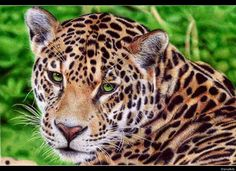 """Jaguar"" by Samuel Silva with BIC ball point pen"