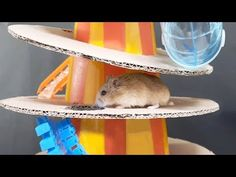 My Funny Pet Hamster in Maze - Obstacle Course Water Games For Kids, Summer Activities For Kids, Indoor Activities, Backyard For Kids, Backyard Games, Outdoor Games, Summer Fun List, Summer Kids, Hamster Diy Cage