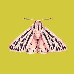 Moths on Behance Illustration Papillon, Botanical Illustration, Illustration Art, Beautiful Bugs, Beautiful Butterflies, Logo Papillon, Moth Drawing, Colorful Moths, Insect Art
