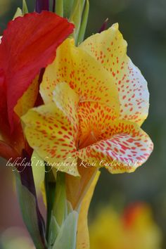 Tropical Flower 8x10 Print by LedByLight on Etsy,