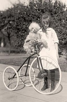 vintage picture of poodle on bicycle