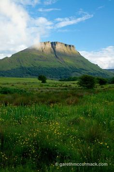 Wildflower meadow beneath Benwiskin mountain, Co Sligo, Ireland. Stock Photo