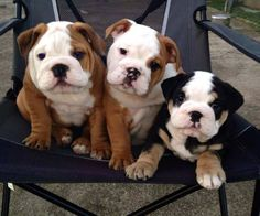 OMG too cute, love the black and white one, because it's so unusual!