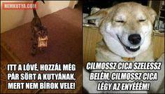 Funny Animals, Jokes, Lol, Random, Husky Jokes, Funny Animal, Memes, Hilarious Animals, Funny Animal Comics