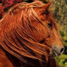 Redhead.horse
