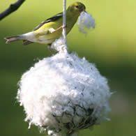 Cottontail Nest Builder