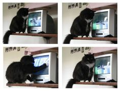 Free Online STreaming Tv