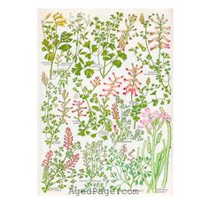 first blooms by Cathleen Repholz on Etsy