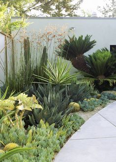 Awesome Drought Resistant Modern Landscape 18 Drought tolerant Home Garden Landscaping Xeriscape Garden Inspiration Modern Xeriscape Gardens 4 Low Water Landscaping, Succulent Landscaping, Front Yard Landscaping, Succulents Garden, Landscaping Ideas, Garden Plants, Backyard Ideas, Inexpensive Landscaping, Landscaping Software