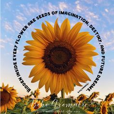 We love this quote and we love this flower ✨🌻 ✨Sunflower seed oil is a great source of vitamin E, rich in nutrients and antioxidants, and is effective for combatting skincare issues like acne, inflammation, general redness and irritation of the skin. Sunflower oil has emollient properties that help the skin retain its moisture. Find this natural oil in many of our products! #sunflower #skincare #naturalskincare #facecare #facial #facecream #facewash #facescrub #organicskincare #crueltyfree Find