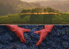 tour California wine country (and drink too)