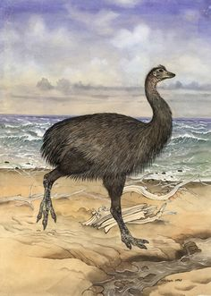 The Elephant bird Aepyornis maximus was last recorded around the end of the 17th century.