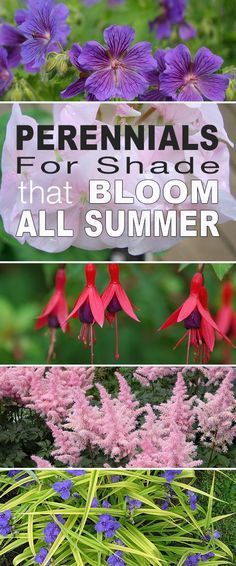 Gardening Tips Here are our top picks for shade plants and choosing perennials for shade that bloom all summer long! - Here are our top picks for shade plants and choosing perennials for shade that bloom all summer long! Plants, Summer Garden, Shade Plants, Perennials, Garden Shrubs, Flower Garden, Flowers Perennials, Garden Planning, Shade Flowers