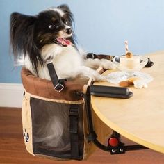 For the pup who engages in proper dining etiquette, there's a high chair. | 28 Ingenious Things For Your Dog You Had No Idea You Needed