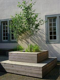 THIS IS IT. This what I pictured. Raised bed for tree...