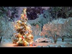 What a beautiful Christmas tree nestled between the snow covered trees and background. Love this outdoor Christmas tree scene and Christmas winter wonderland garden! Christmas Scenes, Noel Christmas, Country Christmas, Outdoor Christmas, Winter Christmas, Christmas Lights, Christmas Morning, Christmas Chords, Christmas Feeling