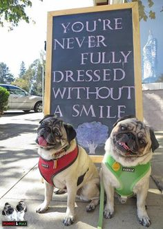 Awesome funny pugs detail is available on our site. Have a look and you will not… Awesome funny pugs detail is available on our site. Funny Dog Memes, Funny Dogs, Funny Animals, Cute Animals, Pug Pictures, Cute Animal Pictures, Cute Pugs, Cute Puppies, Teacup Pug