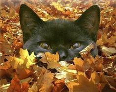 Catouflage