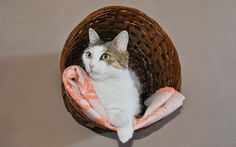 wikiHow to Make a Cat Wall Bed from a Basket -- via wikiHow.com