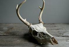 vintage deer skull with antlers & teeth