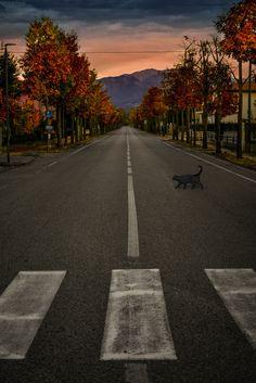 Autumn in Pianzano ©2016 Francesca Mason -all rights reserved-