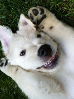 Enter Our i Love My Puppy Photo Contest!