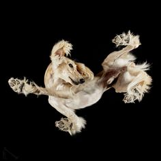 Under-Dogs: I Photograph Dogs From Underneath, Andrius Burba.