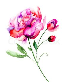 Image of 'Beautiful Peony flower, Watercolor painting'