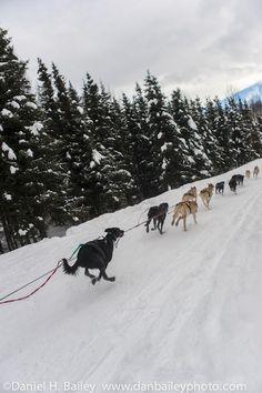 Sled dog racing, Anchorage, Alaska!