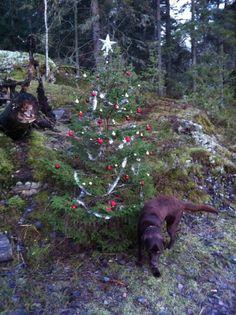 Tree decoration, Christmas, Dog