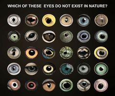 Petsi challenges you to test yourself! Take a look at this picture and answer the question - Which of these eyes do not exist in nature? Make Money Online, How To Make Money, Social Media Marketing Manager, That Look, Take That, The Future Is Now, Balloon Columns, Fun Facts, Digital Marketing