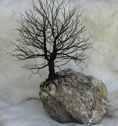 Oak Wire Tree mounted on a stone from the Black Hills of South Dakota    Chêne monté sur une pierre dans les collines noires au Sud du Dakota du Sud