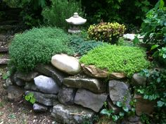 My Japanese garden with creeping thyme