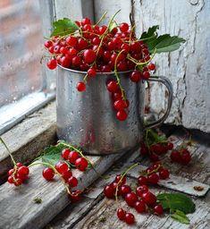 ⠀ ★ Photo b Fruit Photography, Still Life Photography, Currant Berry, Beautiful Fruits, Still Life Photos, Weird Food, Fruit Art, Food Illustrations, Fruits And Veggies