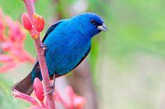 Risultati immagini per cute birds