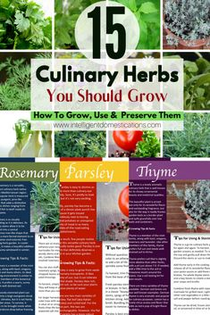 How to grow, use and preserve 15 common culinary herbs. Kitchen herbs you should be growing yourself. #herbgarden #growyourfood #homegarden Herb Guide, Garden Guide, Garden Ideas, Chicken Fajita Wraps, Watermelon Mint Lemonade, Chicken With Prosciutto, Mini Sweet Peppers, Cilantro Lime Sauce, Delicious Dishes